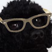 Crazy Hipster Dog