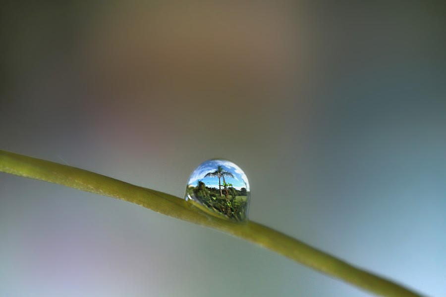 The World Through The Droplet by Christopher Lee - Landscapes Prairies, Meadows & Fields ( #reflection, #macro )
