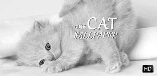 Cute Cat Wallpaper Hd Apps On Google Play