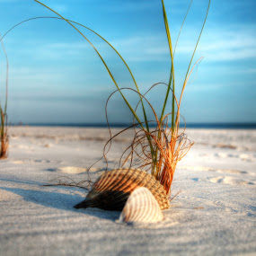 Seashells by the seashore by Shelley Patterson - Nature Up Close Other Natural Objects ( water, sand, beaches, seashell, beach )