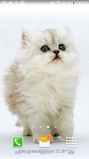 귀요미고양이배경