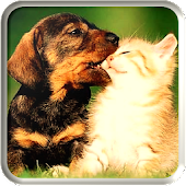 Kitty Puppy Live Wallpapers