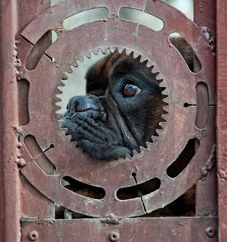 by Vladimir Jablanov - Animals - Dogs Portraits (  )