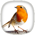 Bird Calls, Sounds & Ringtones icon