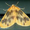 The Begger Moth