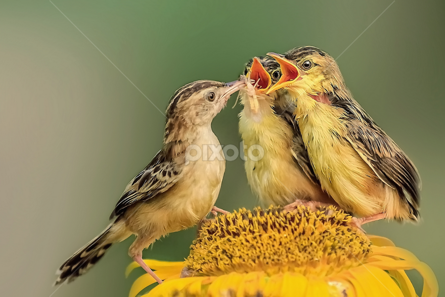 Don't  fights over food... by Husada Loy - Animals Birds