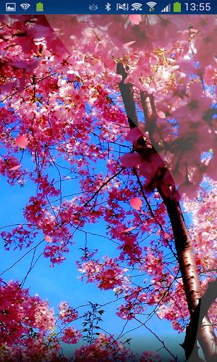 Sakura Little Flowers HD