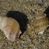 Unknown Snails