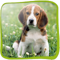 Dog Beagle 3D icon