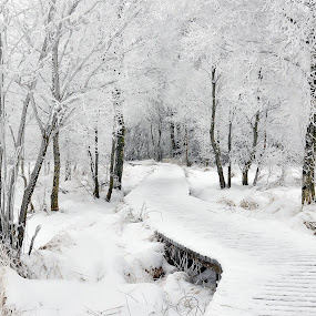 Into White by Dominic Schroeyers - Nature Up Close Trees & Bushes ( forrest, wood, tree, cold, ice, snow, meadow, white, path, trees, walk,  )