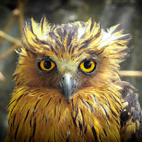by Ady Putra - Animals Birds (  )