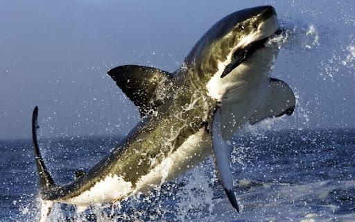 상어 배경 화면