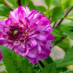 Macam by Azman Kamaruddin - Flowers Flowers in the Wild
