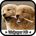 Golden Retriever Wallpapers icon