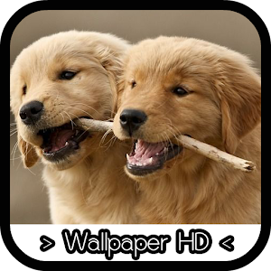 Tải Golden Retriever Wallpapers APK