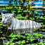 A calm White Tiger.. by Kelvin OY - Animals Lions, Tigers & Big Cats