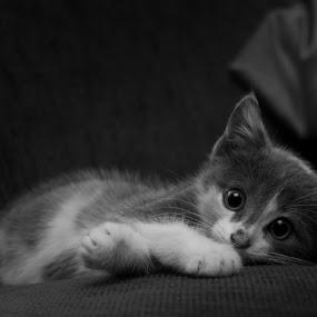 by Christian Tiboldi - Black & White Animals ( black and white, animal,  )