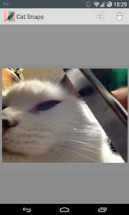 Cat Snaps - Selfies for Cats!- screenshot thumbnail