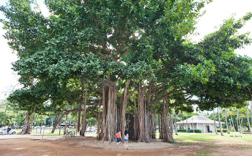 "banyan-tree-Oahu - An otherwordly banyan tree — which resembles the spiritual tree in ""Avatar"" — in Sans Souci State Recreational Park, right off Honolulu's main drag."