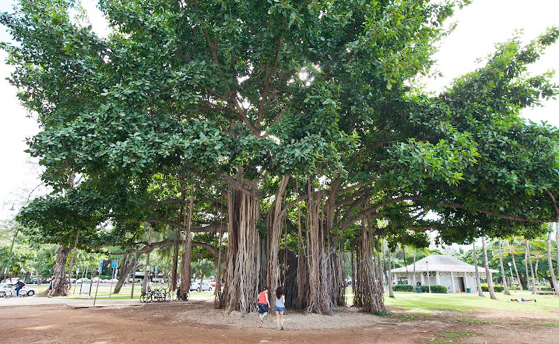 An otherwordly banyan tree — which resembles the spiritual tree in
