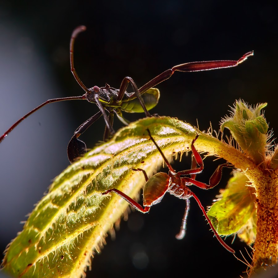 by Kimpul Kimpul - Uncategorized All Uncategorized ( sexy, nature, beautiful, insect, close up )