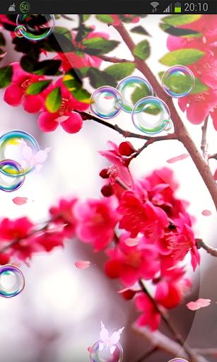 Spring Cherry Live Wallpaper