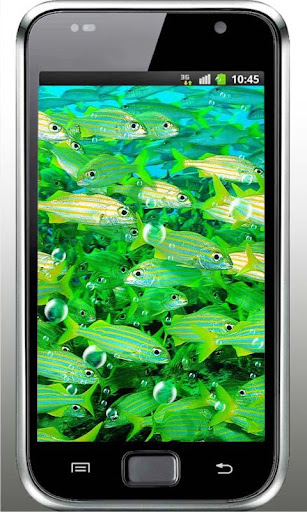 Fishes Racing live wallpaper