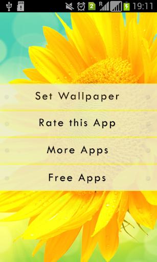 Amazing Sunflower LWP