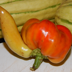 A Confused Pepper by Jason Asselin - Food & Drink Fruits & Vegetables ( nature, male, gardening, pepper, weird )