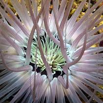 Marine Invertebrates & Molluscs of Tenggol Island