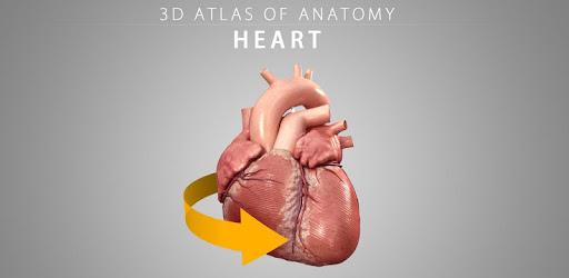 Heart 3D Anatomy - Apps on Google Play