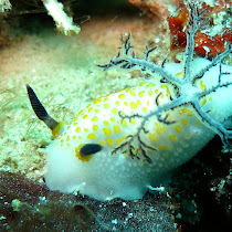 Sea creatures of Anilao