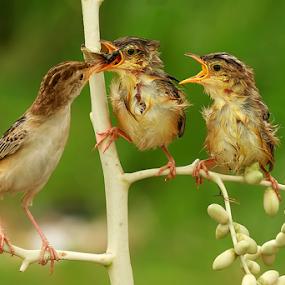 Lunch..... by Husada Loy - Animals Birds