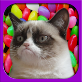 2048 Grumpy Cat version