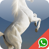 Horse Wallpapers for WhatsApp