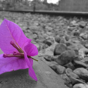 Alone by Dhani Prasetya Yudhistira - Instagram & Mobile Other ( selective color, purple, alone, flower, pwc )