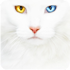 Cats puzzle icon