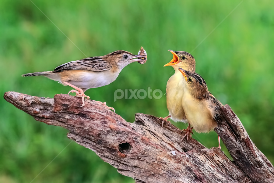 Lunch.. Time by Husada Loy - Animals Birds