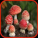 Mushroom Wallpaper icon