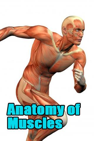 Anatomy of Muscles