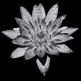 by Asher Jr Salvan - Black & White Flowers & Plants