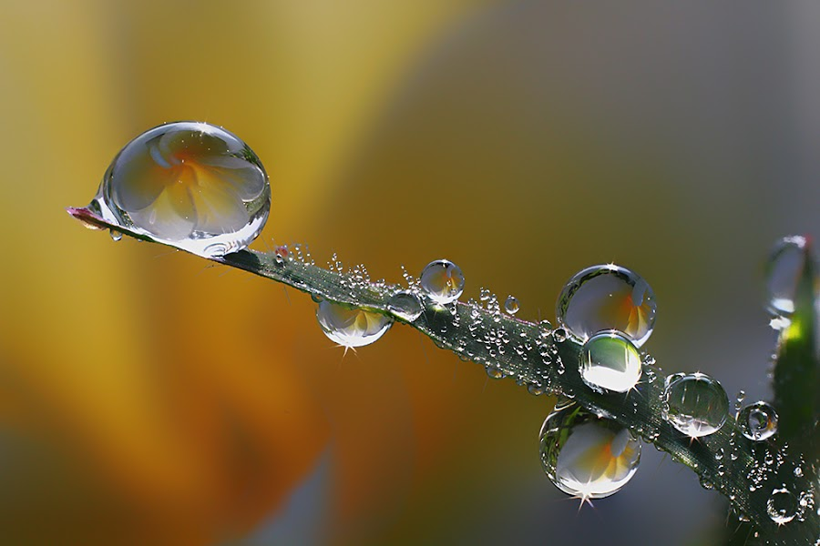:: On the grass :: by Dedy Haryanto - Nature Up Close Natural Waterdrops