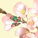 [Floral Illust] Cherry Atom icon