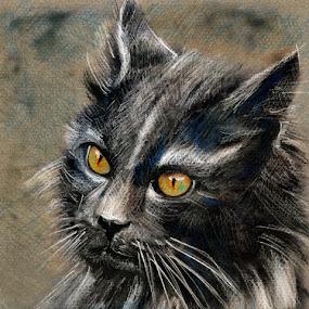 Wild Cat by Daliana Pacuraru - Drawing All Drawing ( drawings, cat, daliana pacuraru, fur, grey, eyes,  )