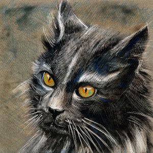 pixoto grey cat yellow eyes fine art cati.jpg
