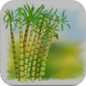 Sugarcane English