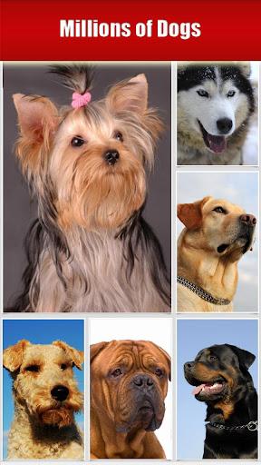 Dog Breeds HD Catalog