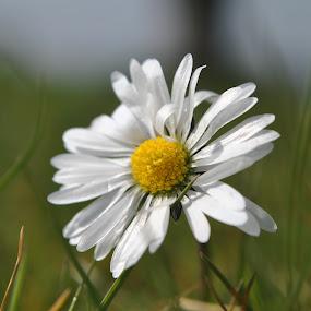 by Gav Wyatt - Flowers Single Flower