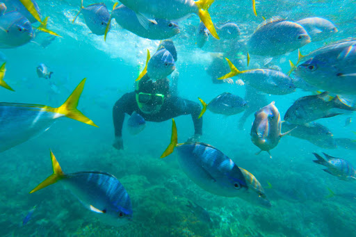 Australia-Whitsunday-Islands-Snorkeling - A snorkeler encounters a school of fish in the Whitsunday Islands of Australia during a G Adventures expedition.