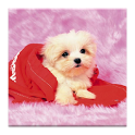 3D pet dog HD live wallpaper icon